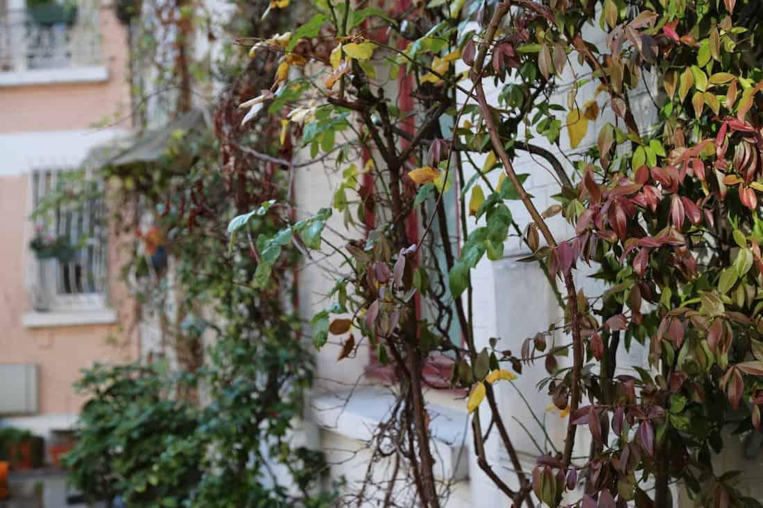 cité-florale-paris-13e