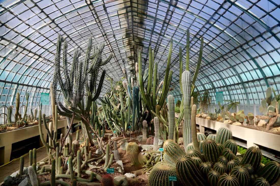 serres-auteuil-cactus