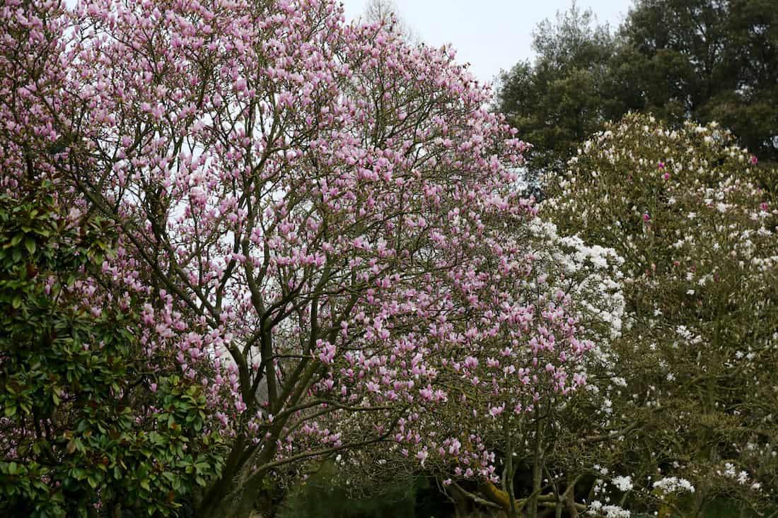 arboretum-breuil-paris-12-vincennes