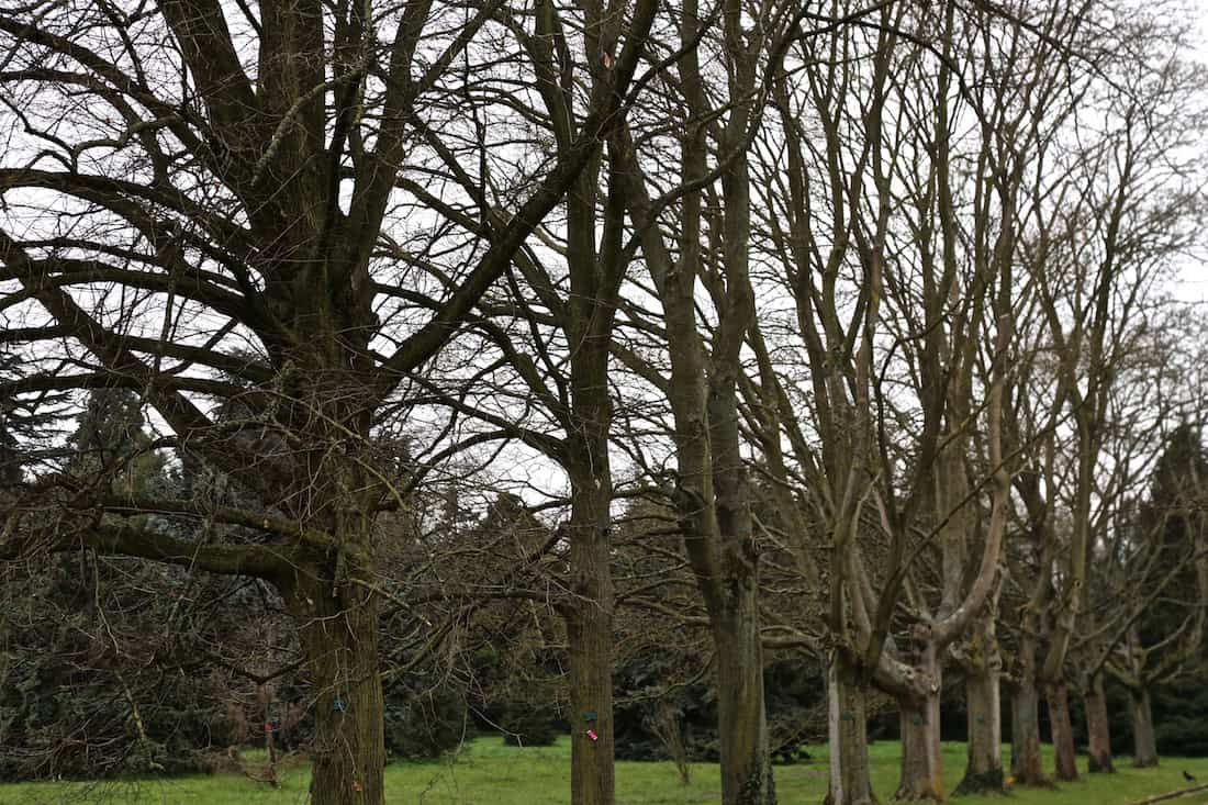arboretum-breuil-paris-12eme-vincennes