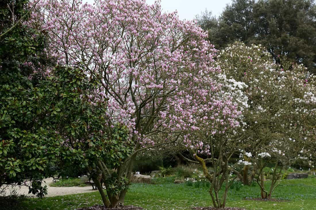 arboretum-breuil-paris12eme-vincennes