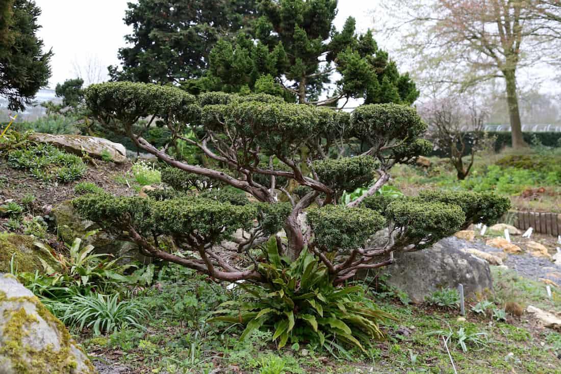 arboretum-paris-12e