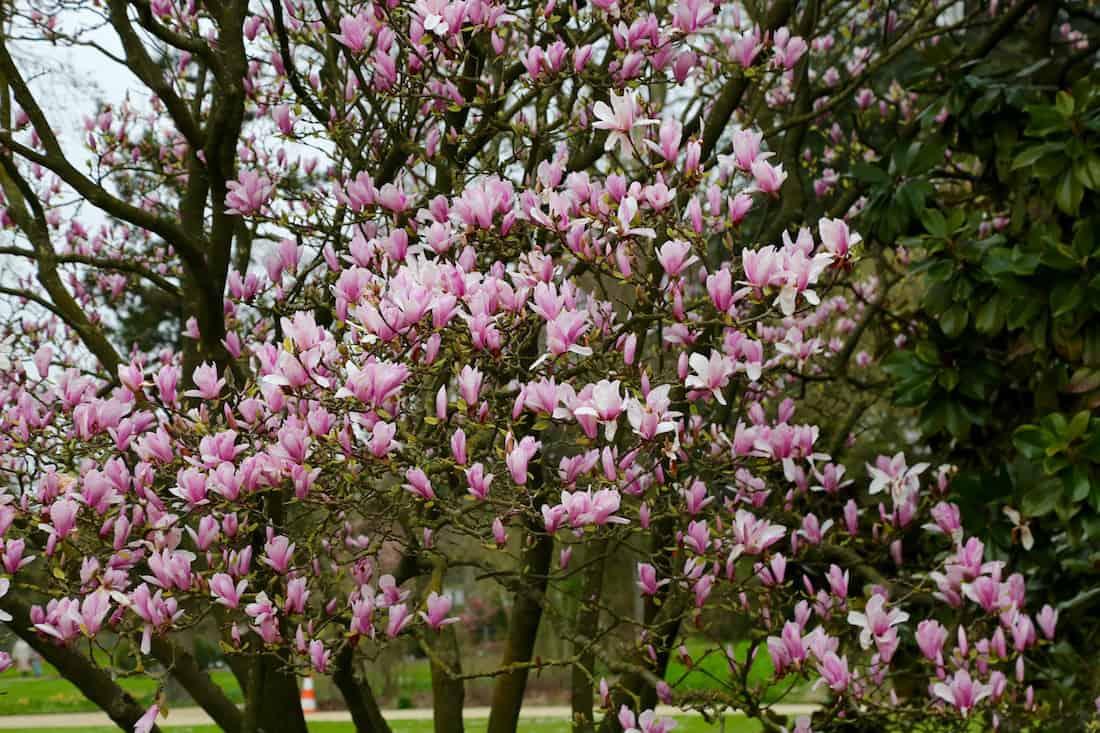 arboretum-paris-12eme-vincennes