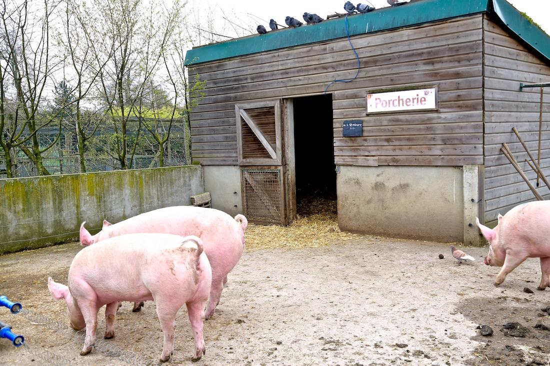 ferme-de-paris-75012-vincennes-animaux