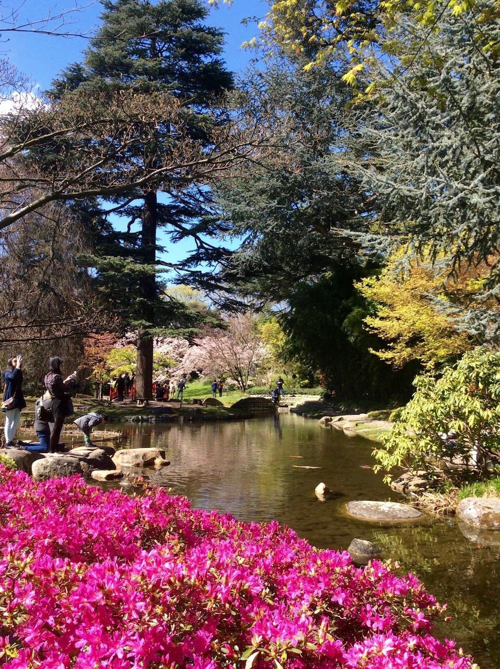 hanami-jardin-albert-kahn