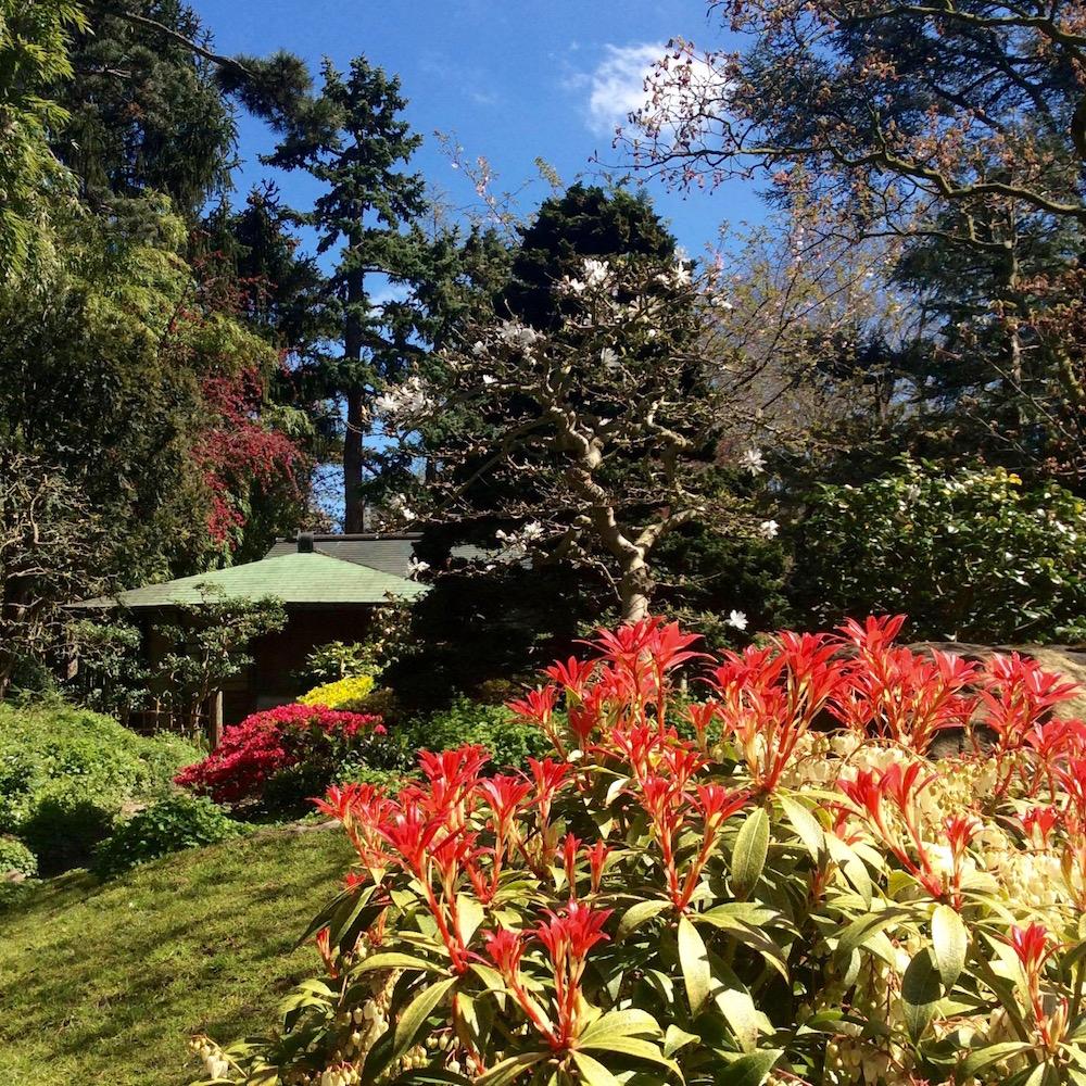jardin-albert-kahn-boulogne-hanami