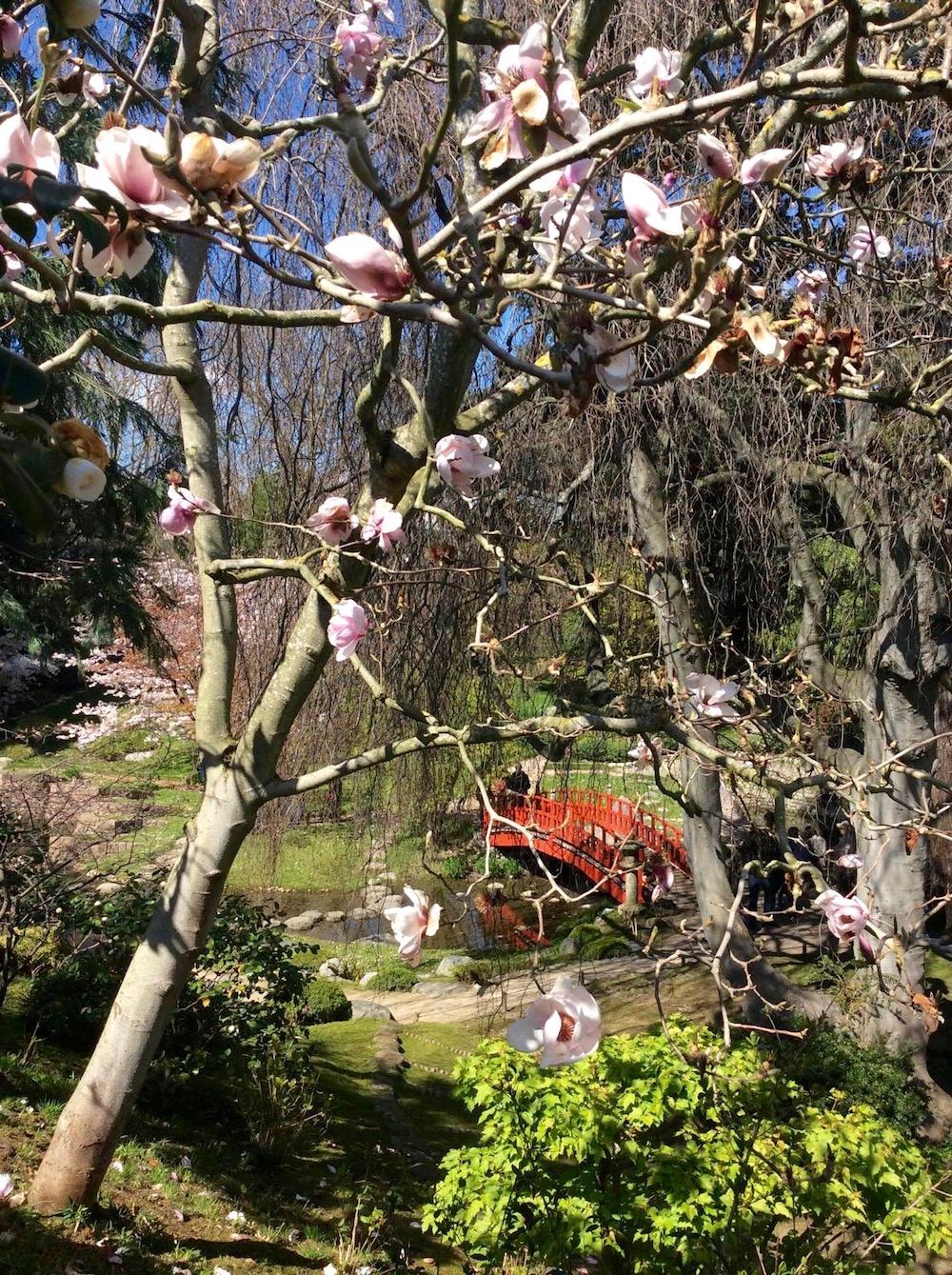 jardin-albert-kahn-boulognebillancourt-hanami