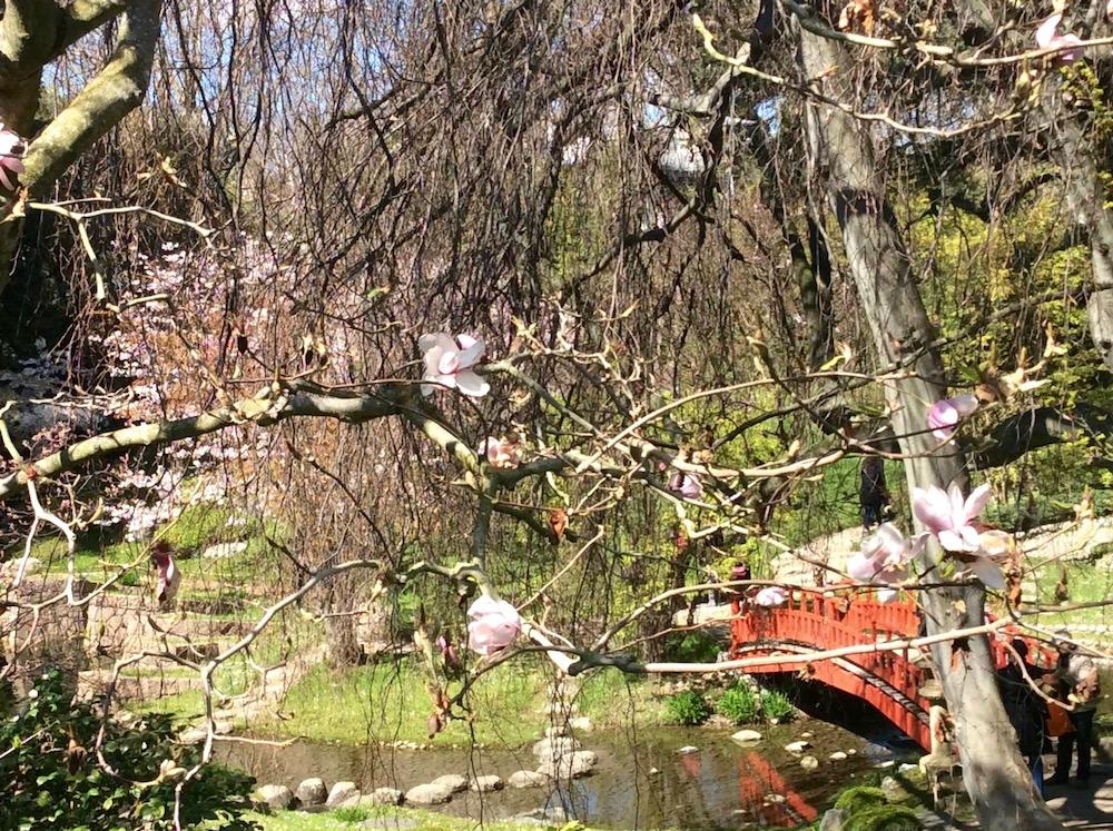 Le jardin albert kahn boulogne for Jardin anglais albert kahn