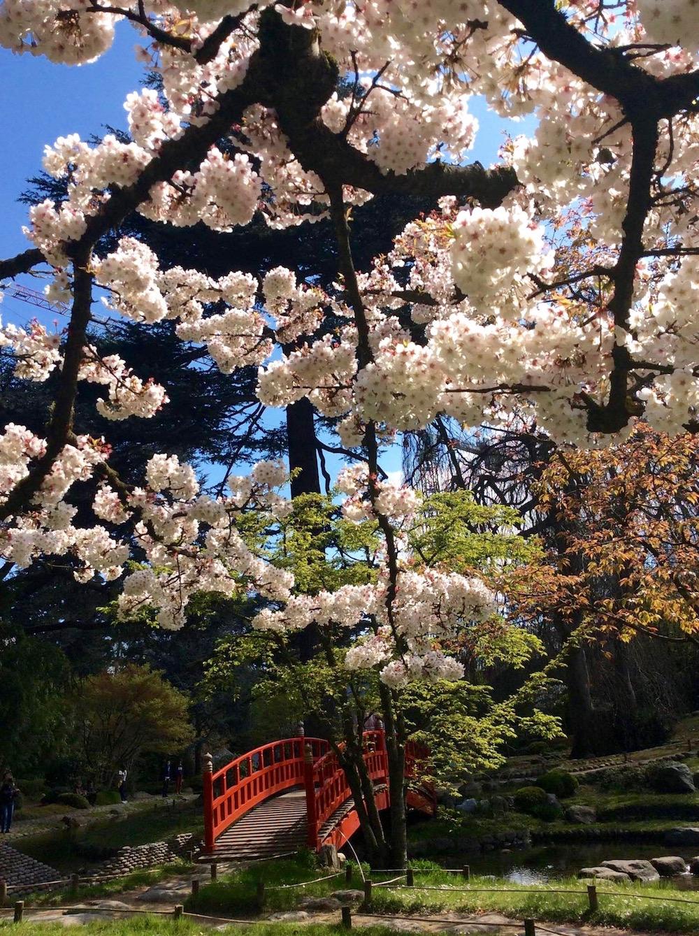 jardin-albert-kahn-hanami