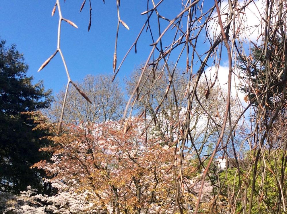 jardin-albert-kahn-japon-boulogne