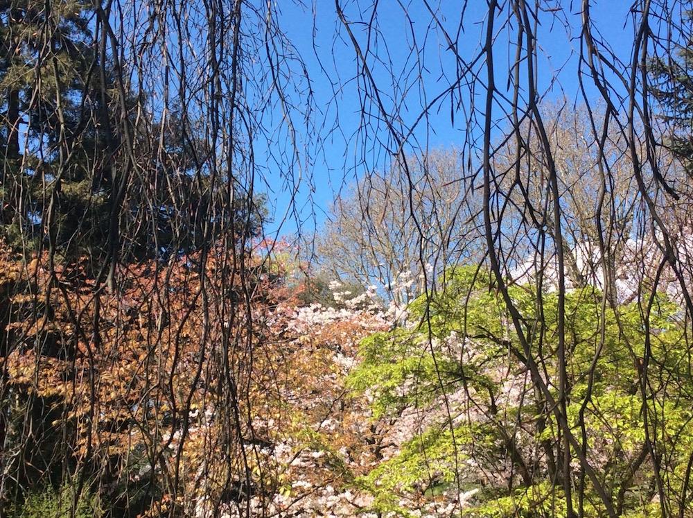 jardin-albert-kahn-japon