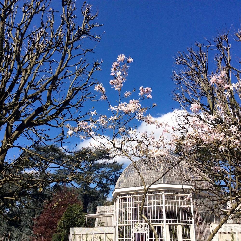 jardin-albert-kahn-printemps-hanami