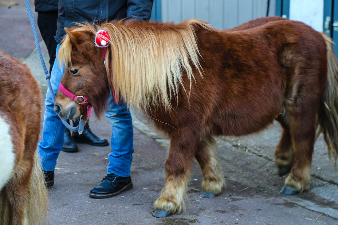 Où faire du poney à Paris ?