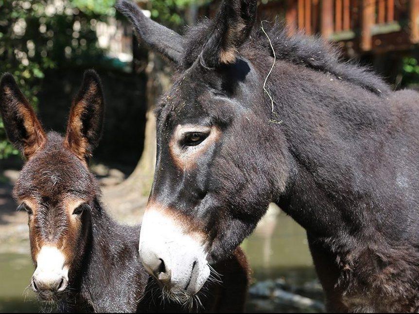 Voir des animaux paris et autour de paris fermes zoos for Jardin animaux paris
