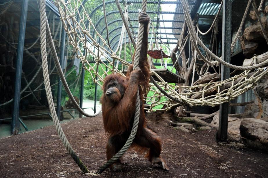 Voir des animaux paris et autour de paris fermes zoos - Menagerie du jardin des plantes paris ...