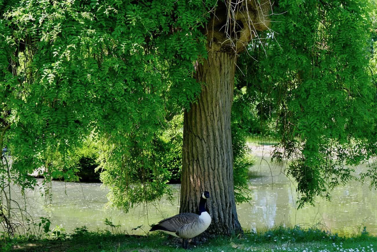 jardin-bagatelle-paris16-e-bois-de-boulogne-beau-jardin-parc