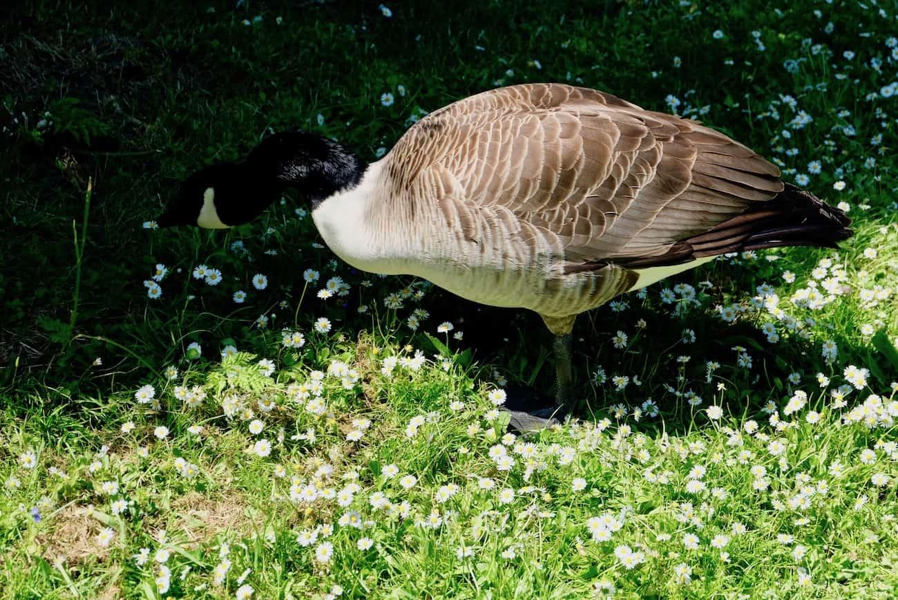 jardin-bagatelle-paris16eme-bois-de-boulogne-beau-jardin-parc