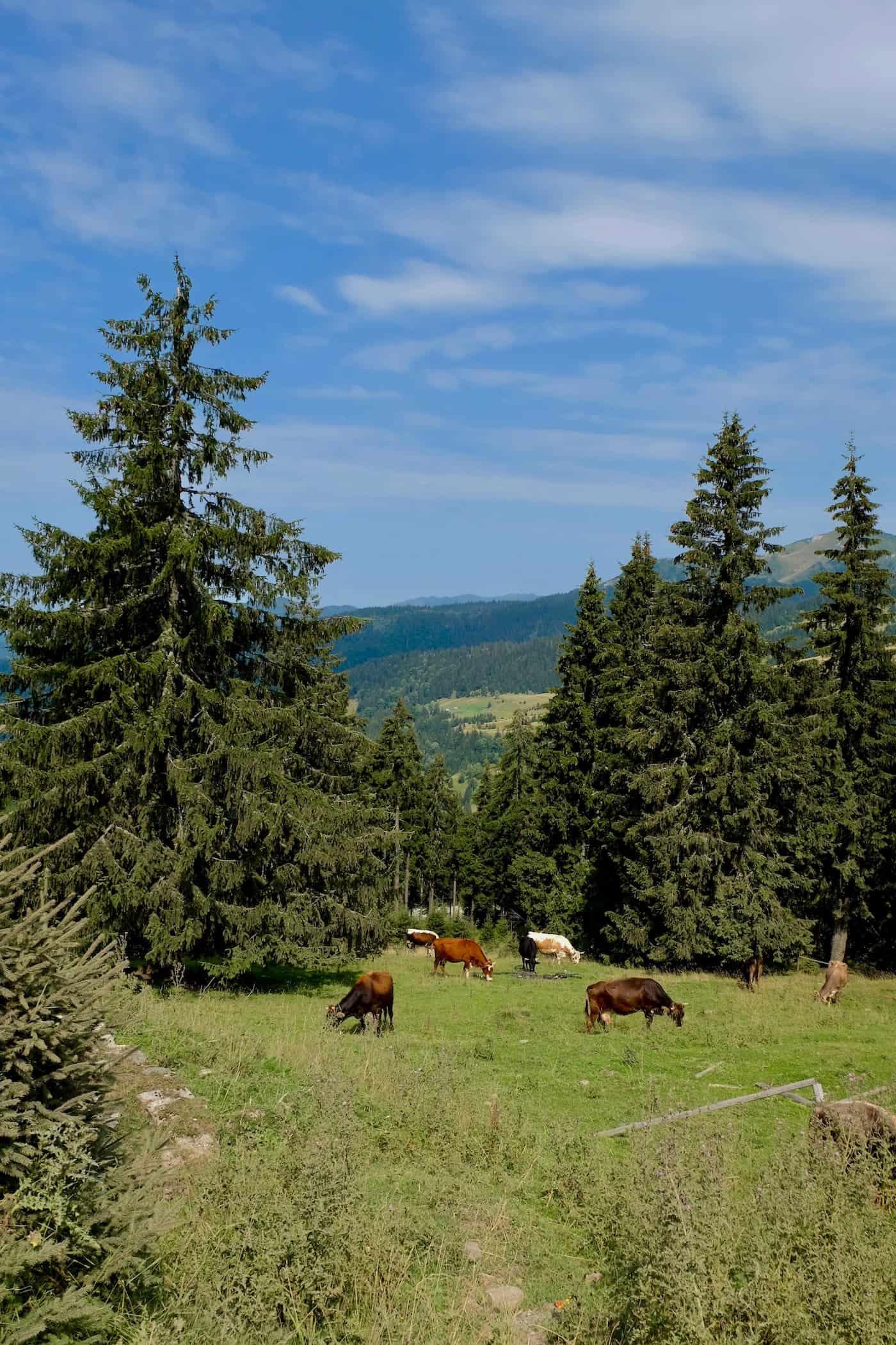 visiter-roumanie-blog