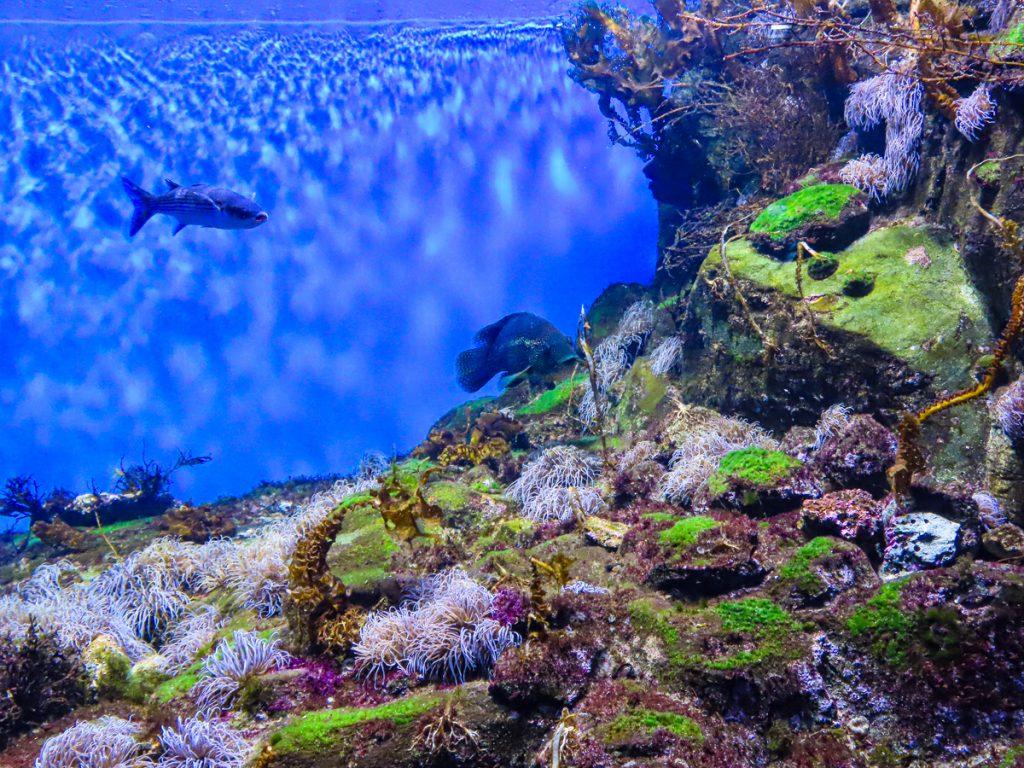 aquarium-la-rochelle-visiter-week-end-famille
