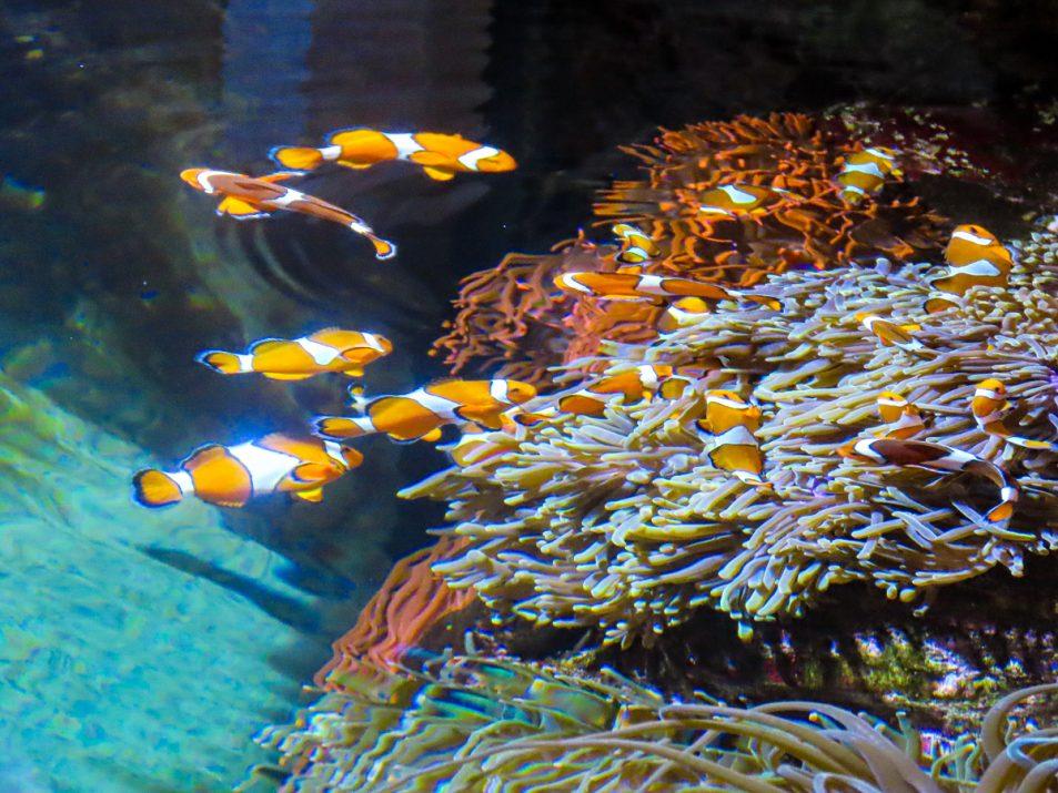 aquarium-la-rochelle-visiter-week-end-famille-11