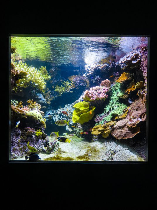 aquarium-la-rochelle-visiter-week-end-famille-14