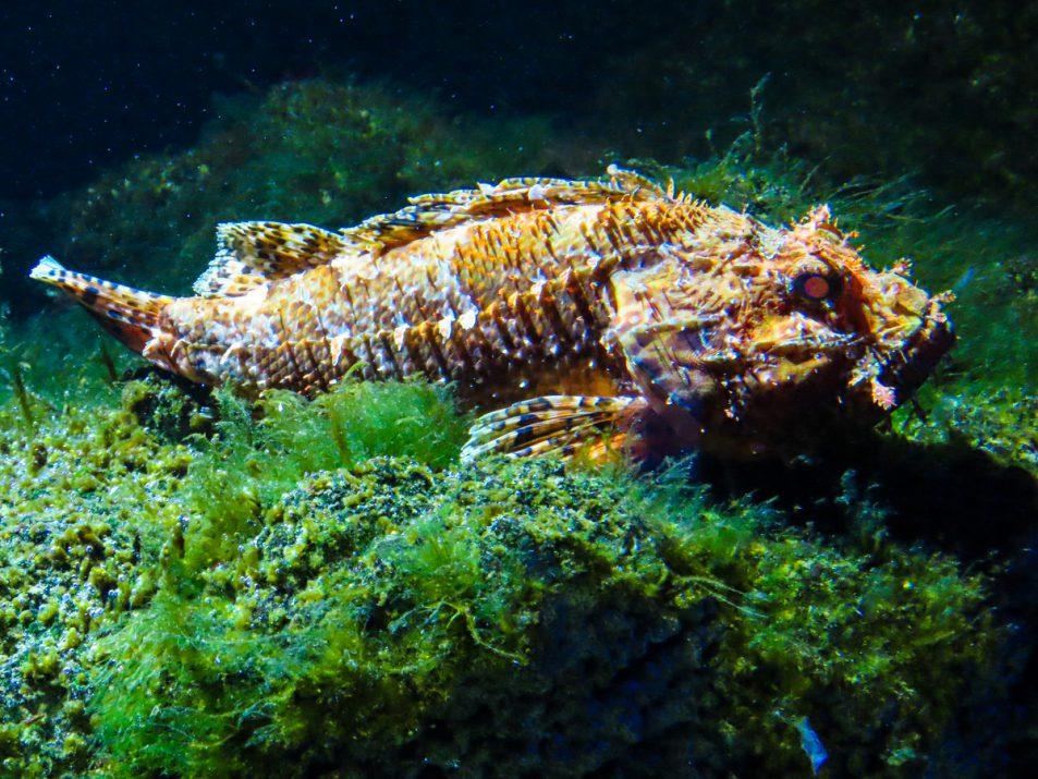 aquarium-la-rochelle-visiter-week-end-famille-7