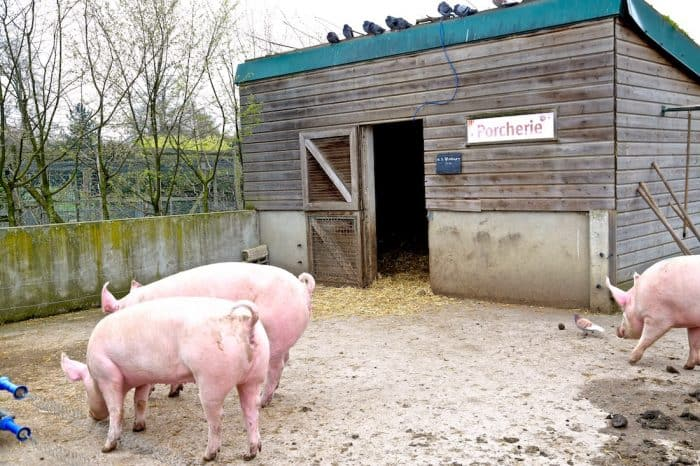 ferme-de-paris-75012-vincennes-animaux