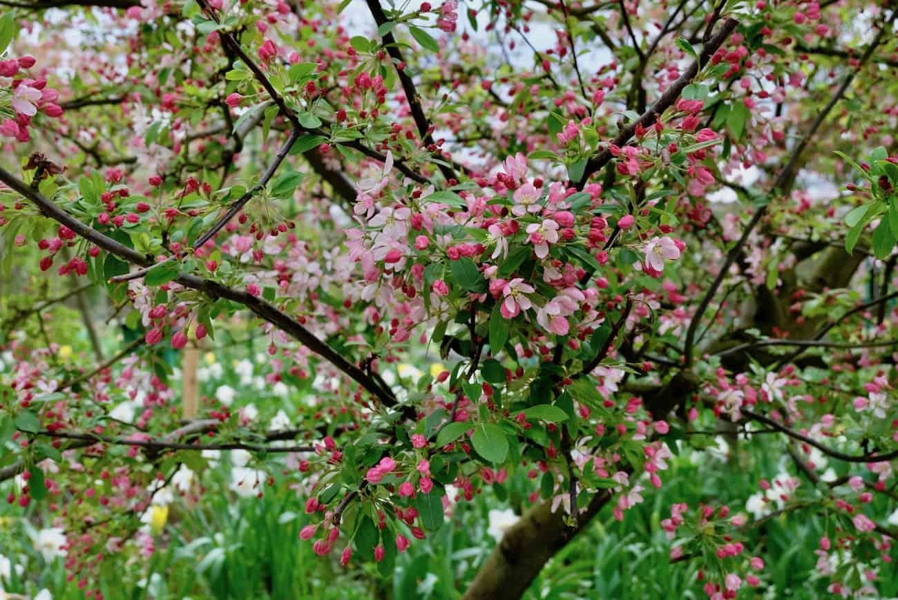 jardin-fondation-claude-monet-giverny-une-heure-paris