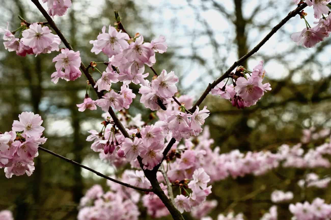 Arboretum-de-la-Vallee-Loups-chatenay-malabry-92-balade
