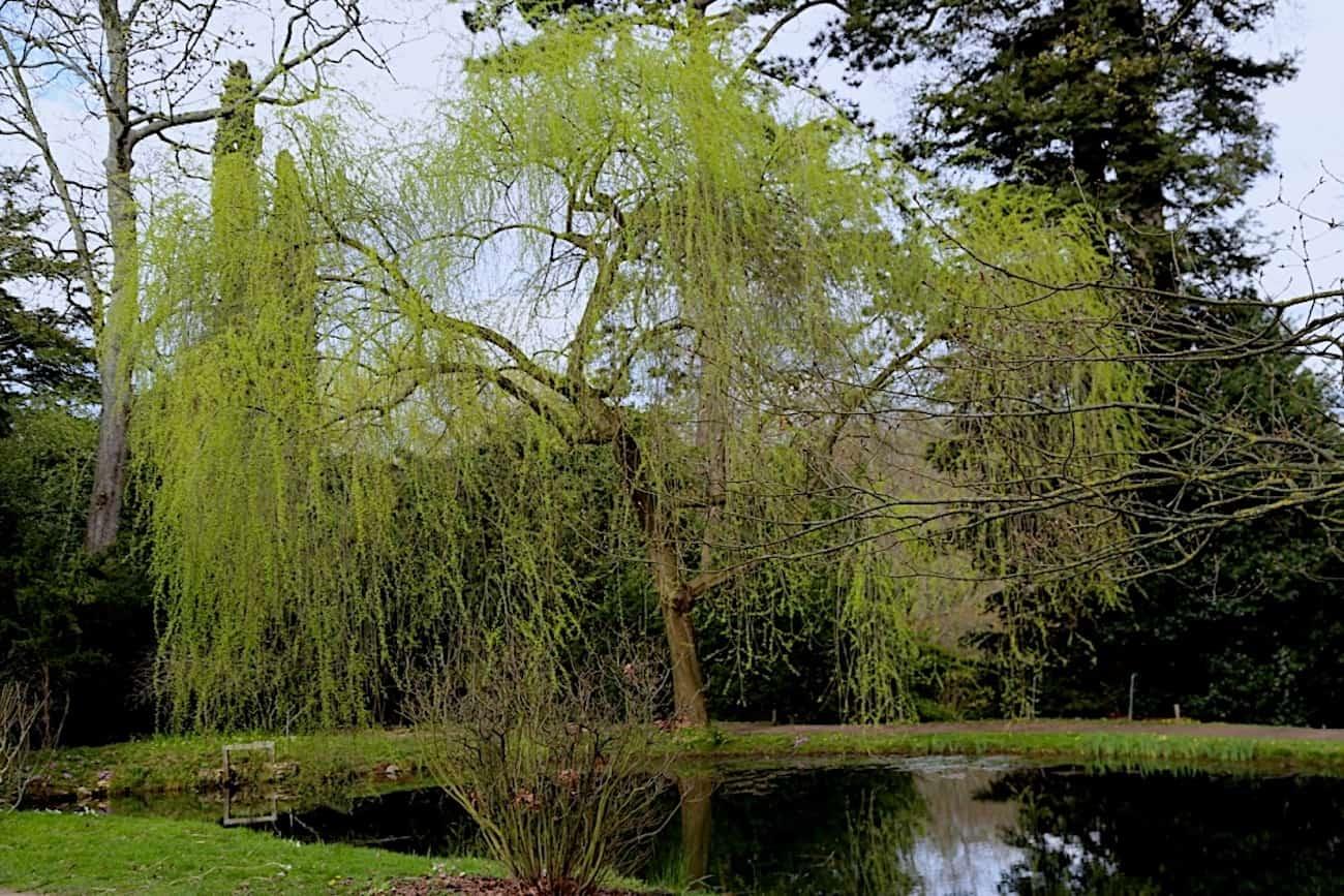 Arboretum-de-la-Vallee-aux-Loups-chatenay-malabry-92-balade-acote-de-paris