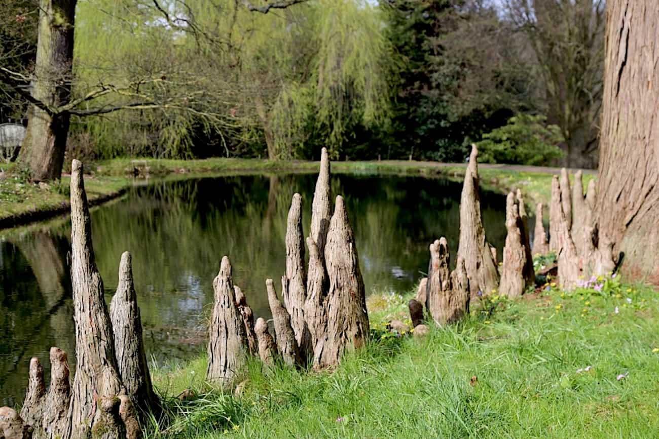 Arboretum-de-la-Vallee-aux-Loups-chatenay-malabry-92-balade-parc