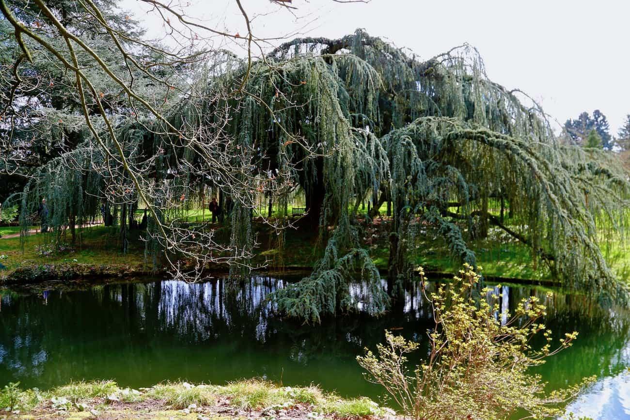 Arboretum-de-la-Vallee-aux-Loups-chatenay-malabry-92-balade-proche-paris