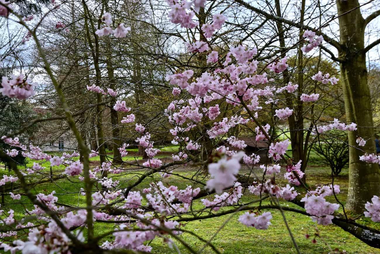 Arboretum-de-la-Vallee-aux-Loups-chatenay-malabry-92-balade
