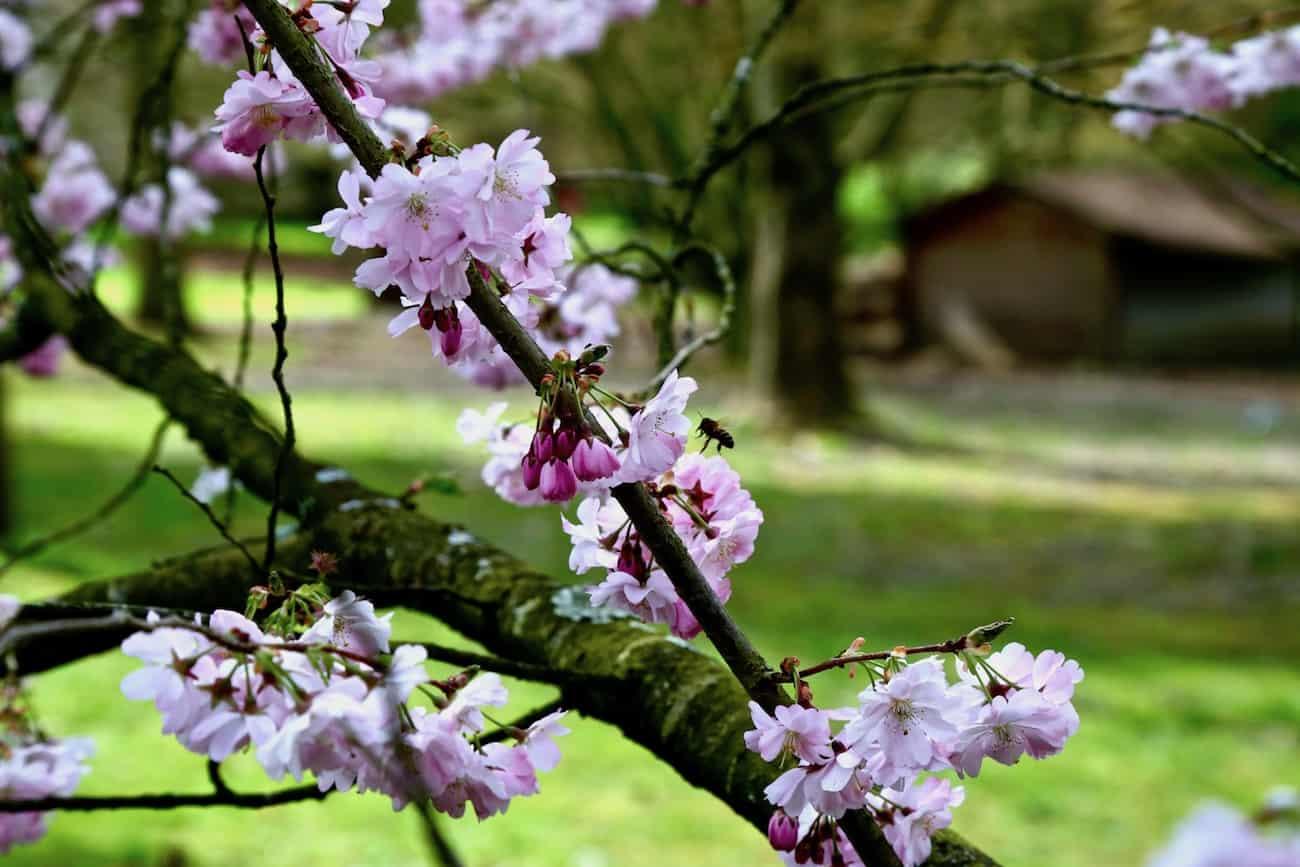 Arboretum-de-la-Vallee-aux-Loups-chatenay-malabry-92