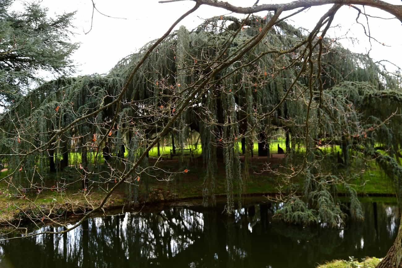 Arboretum-de-la-Vallee-aux-Loups-chatenay-malabry-hauts-de-seine-balade