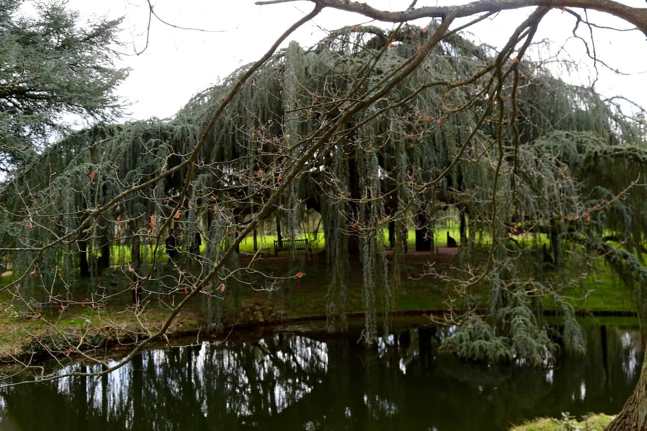 Arboretum-de-la-Vallee-aux-Loups-chatenay-malabry