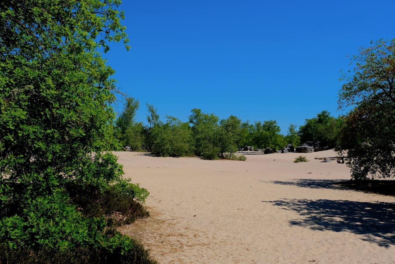 foret-fontainebleau-cul-de-chien-sable-plage-noisy