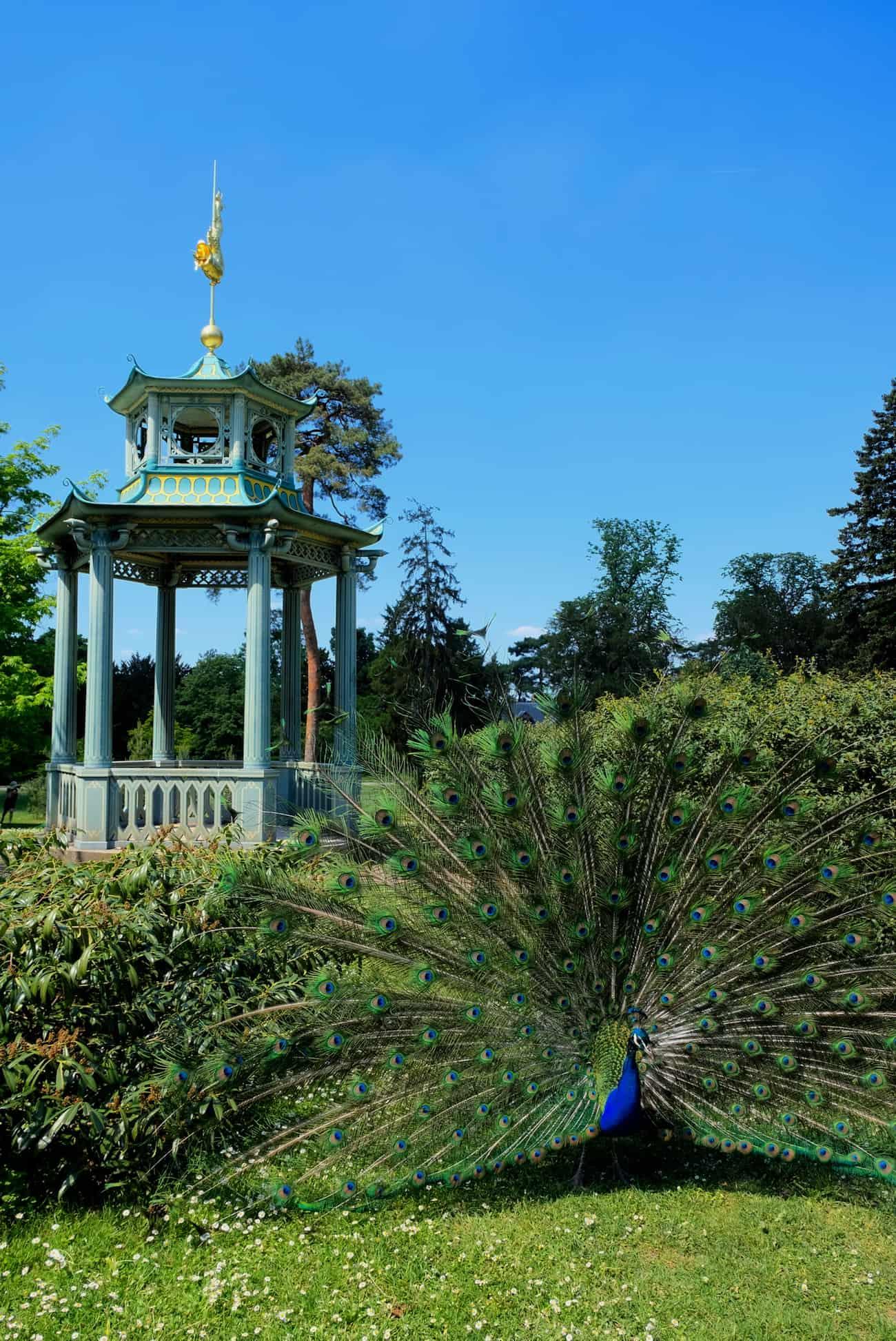 jardin-bagatelle-paris-16em-bois-de-boulogne-beau-jardin-parc