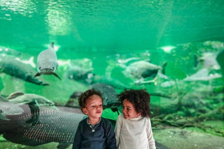 Biotropica, jardins animaliers dédiés à la préservation des espèces à 1h30 de Paris