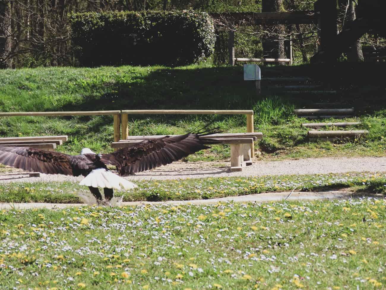 rambouillet-espace-rambouillet-spectacle-rapaces-cerfs-10