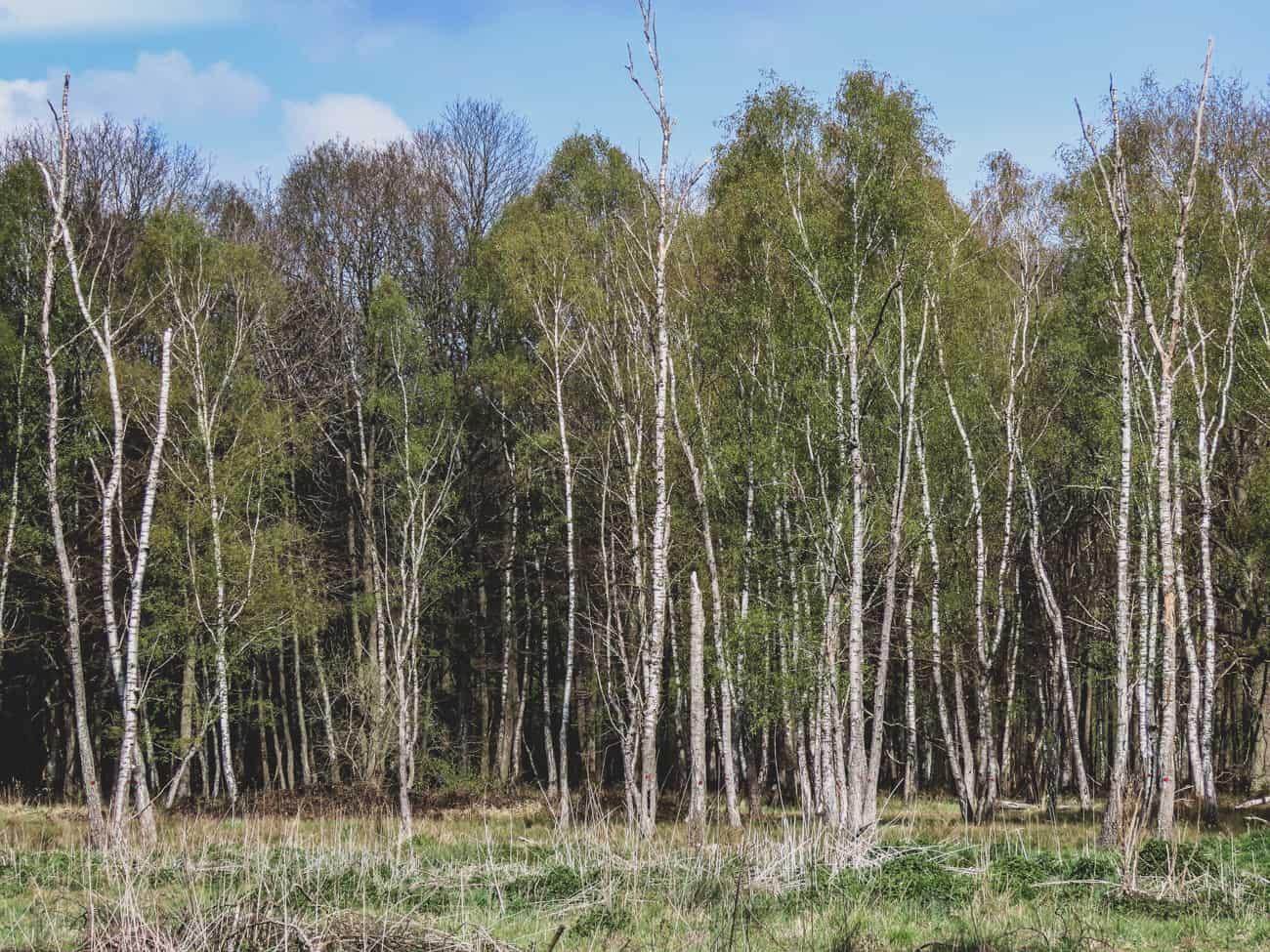 rambouillet-espace-rambouillet-spectacle-rapaces-cerfs-16