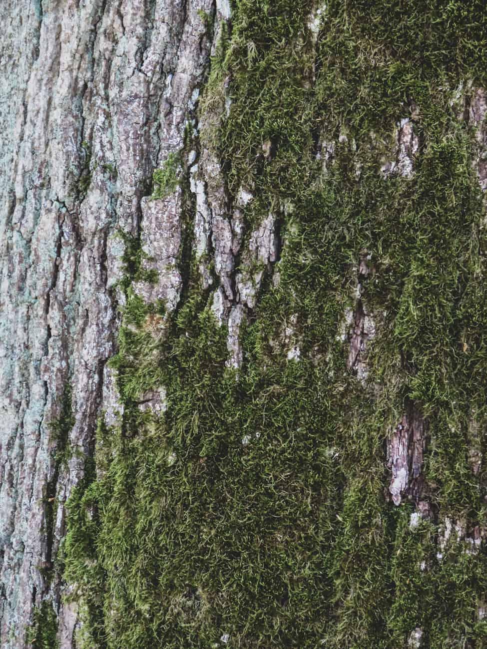 rambouillet-espace-rambouillet-spectacle-rapaces-cerfs-17