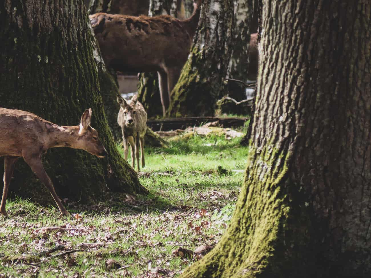 rambouillet-espace-rambouillet-spectacle-rapaces-cerfs-19