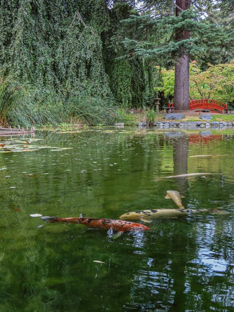 jardin-albert-kahn-musee-boulogne-billancourt-11