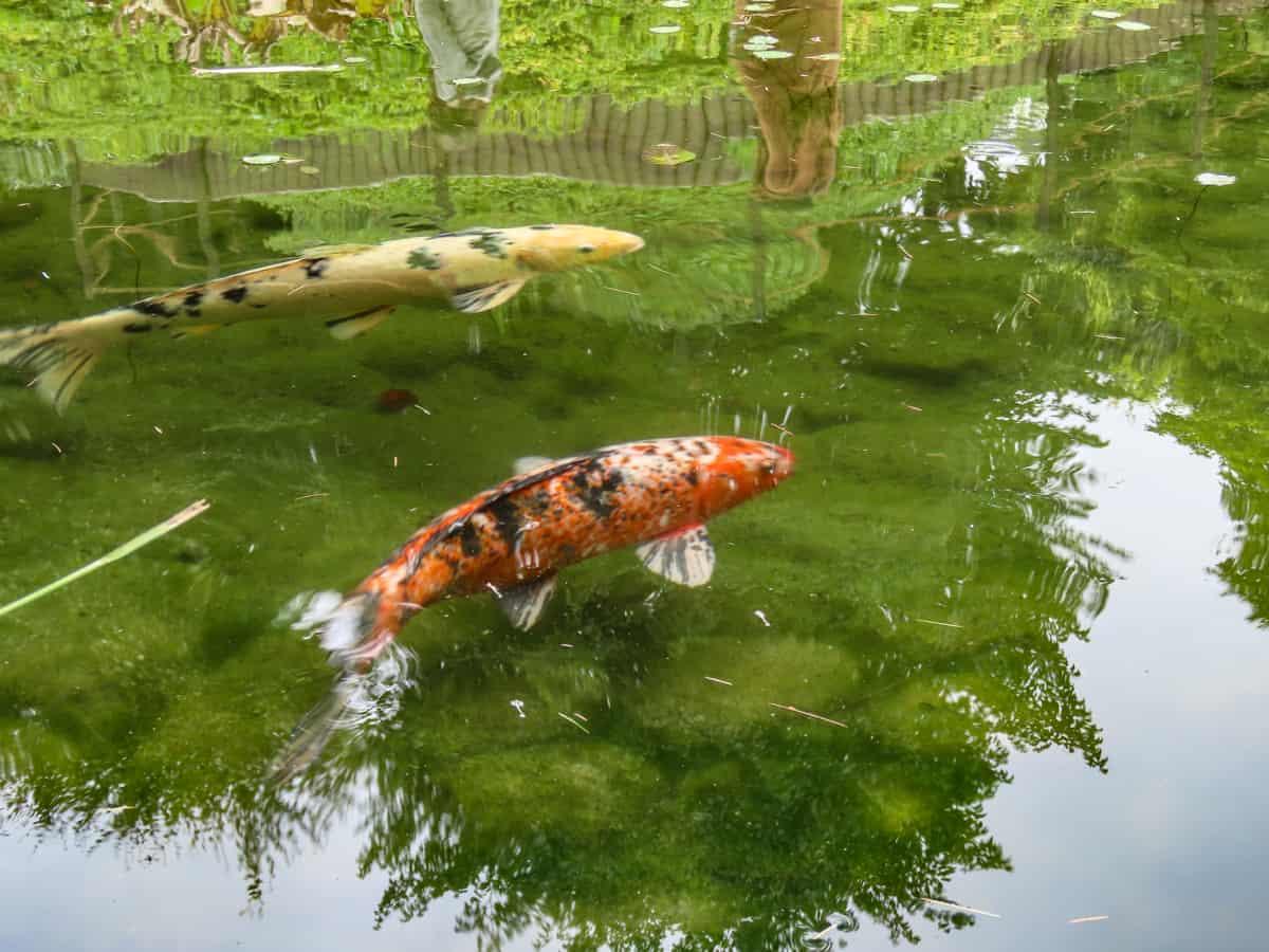 jardin-albert-kahn-musee-boulogne-billancourt-12