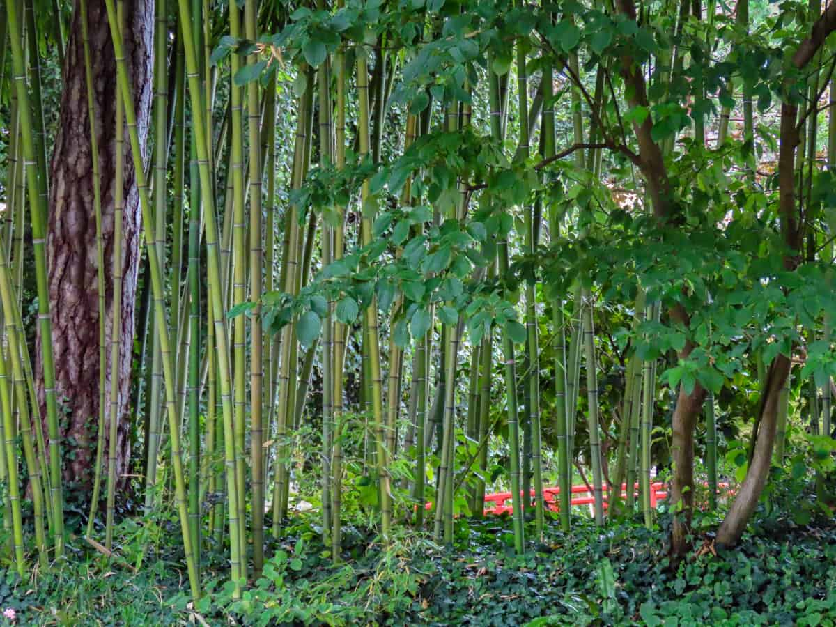 jardin-albert-kahn-musee-boulogne-billancourt-26