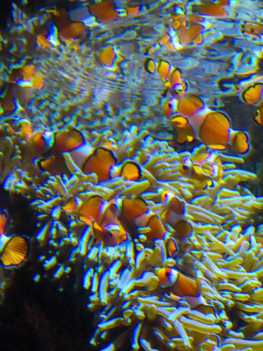 aquarium-la-rochelle-visiter-week-end-famille-12