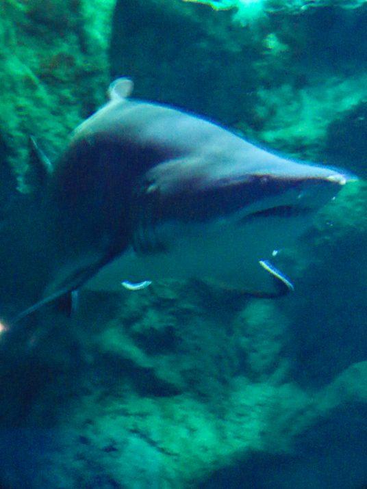 aquarium-la-rochelle-visiter-week-end-famille-13