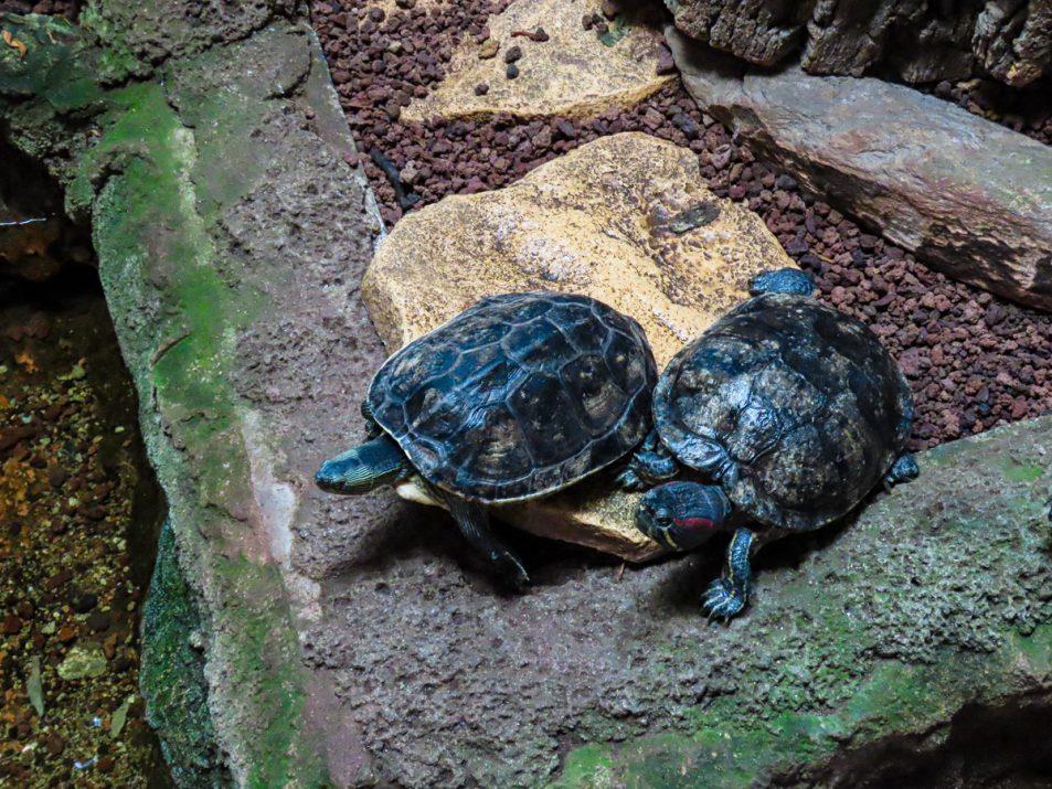aquarium-la-rochelle-visiter-week-end-famille-19
