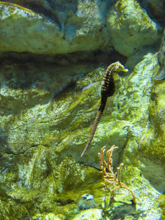 aquarium-la-rochelle-visiter-week-end-famille-3